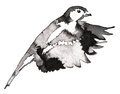 Black and white monochrome painting with water and ink draw tit bird illustration