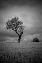 Black White Moody Atmospheric Tree in Countryside Royalty Free Stock Photo