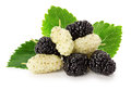 Black and white mulberry isolated on the white background Royalty Free Stock Photo