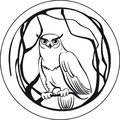 Black and white owl sitting on a branch tree circular