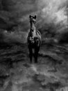 Black and white pagasus steed in clouds pegasus standing dark storm Stock Photos