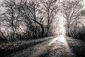 Black and white photo of a road surrounded my trees with light a high resolution in best quality Royalty Free Stock Photo
