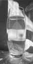 Black and white photo of skeletonized leaf of ficus ficus benjamina on a glassy vase Royalty Free Stock Photos