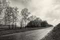 Black white photography countryside empty road, birch tree forest, cloudy weather landscape