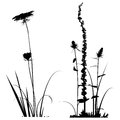 Black and white Plants silhouettes collection for designers