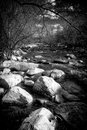 Black and White Rapids of a Small Stream Royalty Free Stock Photo
