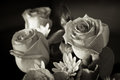 Black and white rose bunch of three roses in Royalty Free Stock Photo