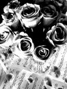 Black & White Roses in a Vase Stock Photography
