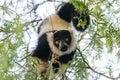 Vari obráceně na strom jíst
