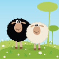 Black and white sheep on special background Royalty Free Stock Images