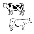 Black and white silhouettes of cows