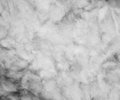 Black and white, the texture of the fur, visible fibers closeup. Royalty Free Stock Photo