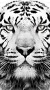 Black and white tiger pattern wallpaper Royalty Free Stock Photo