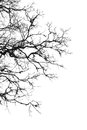Black and white tree margin with twigs sky Royalty Free Stock Photography