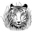 Black and white vector sketch of a tiger's face. Royalty Free Stock Photo