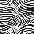 Black And White Zebra Animal S...