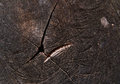 Black wooden texture old structured background Stock Photography