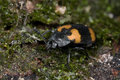 Black and yellow beetle on tree trunk Stock Photo