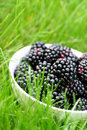 Blackberries Royalty Free Stock Photo