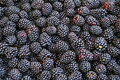 Blackberries background from fresh and juice Royalty Free Stock Image