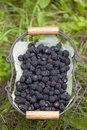 Blackberries in basket Stock Image