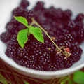 Blackberries brambles in a white bowl put on a grass fresh fruits summer seasonal fruits nobody organic food macro perspective Stock Photo