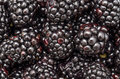 Blackberries close up fruits background Stock Photos