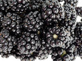 Blackberries in detail Stock Photography