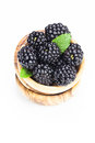 Blackberries fresh organic in olive wood bowl on white background copy space composition Stock Photos