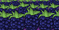 Blackberries fruit cartoon pattern blue illustration Royalty Free Stock Photography