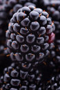 Blackberries fruits and vegetables group of fresh close up shot Royalty Free Stock Images