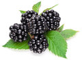 Blackberries isolated on white background Stock Photos