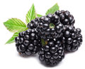 Blackberries isolated on white background Royalty Free Stock Images