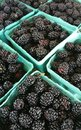 Blackberries at a produce stand Stock Photo