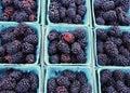 Blackberries ripe fresh from the farmer s market Royalty Free Stock Photos