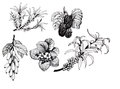 Blackberries, strawberries and dogwood and sea buck-thorn berries, black and white illustration set Royalty Free Stock Photo