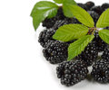 Blackberries on a white background Royalty Free Stock Photo