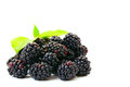 Blackberries on a white background Stock Photography