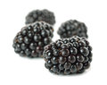 Blackberries on white background macro picture Royalty Free Stock Photo
