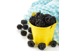 Blackberries in a yellow bucket on a white background Stock Photos