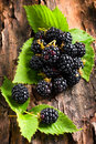 Blackberry on bark background Stock Photo