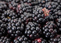 Blackberry berry Royalty Free Stock Photography