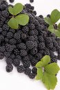 Blackberry close up on fresh Royalty Free Stock Photography