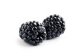 Blackberry close up view of nice fresh on white back Royalty Free Stock Photo