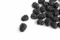 Blackberry close up view of nice fresh on white back Stock Photography