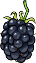 Blackberry fruit cartoon illustration of berry food object Stock Photos