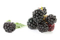 Blackberry and leaf Royalty Free Stock Photography