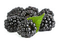 Blackberry with leaf Royalty Free Stock Photo