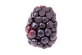 Blackberry Macro Royalty Free Stock Image