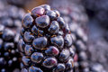 Blackberry macro single berry Stock Photo